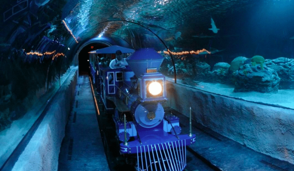 Get An Up-Close Look At Sharks On This Underwater Train Ride In Houston