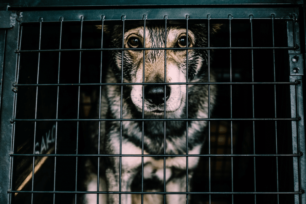 Texas House Lawmakers Ban Puppy Mills Under New Bill