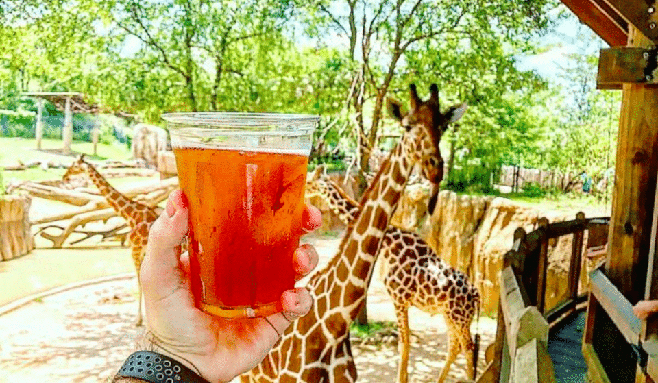 Brew At The Zoo Returns To The Houston Zoo Tonight